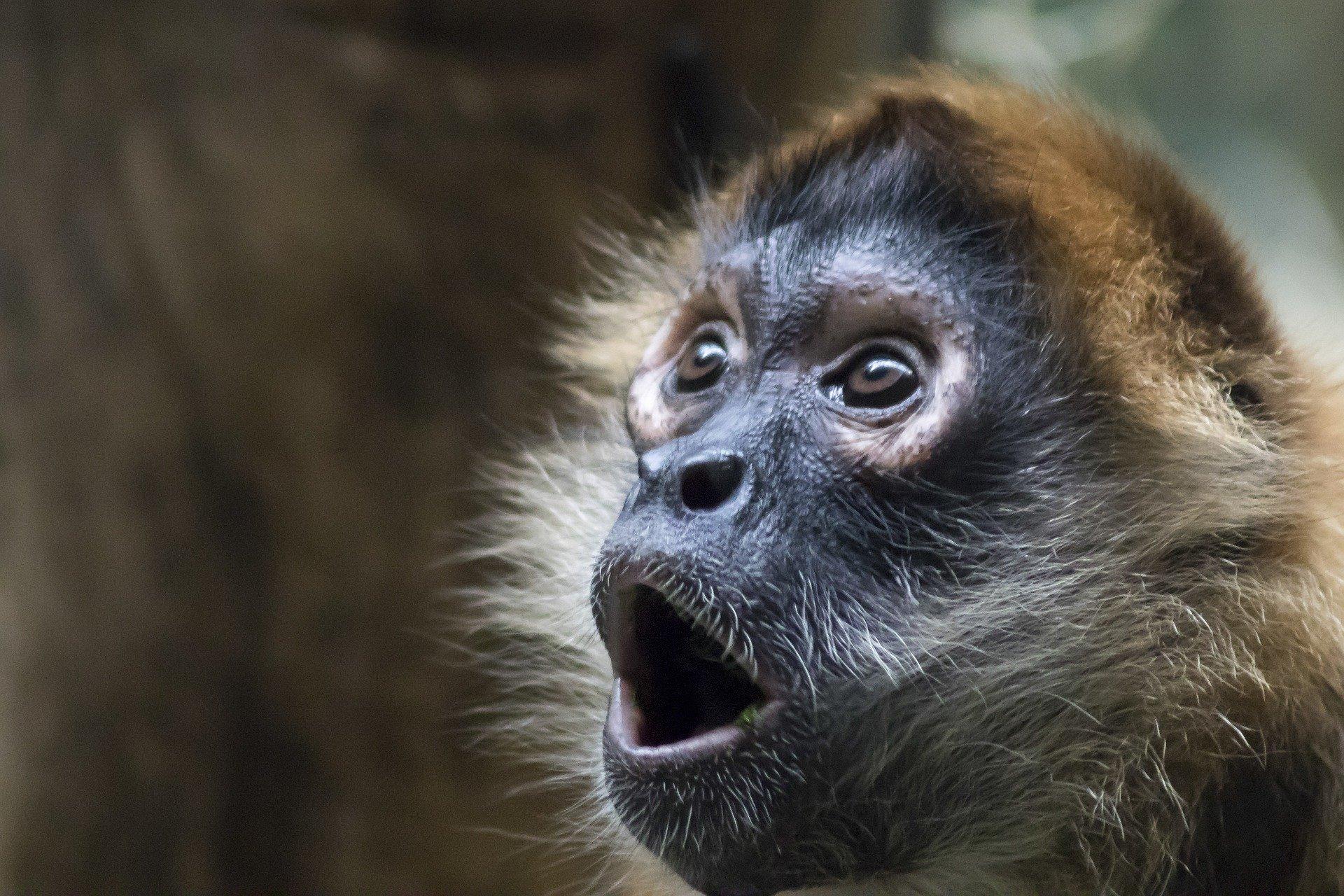サルが驚く顔